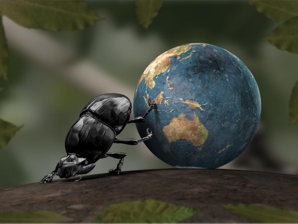 Земля и навозный жук