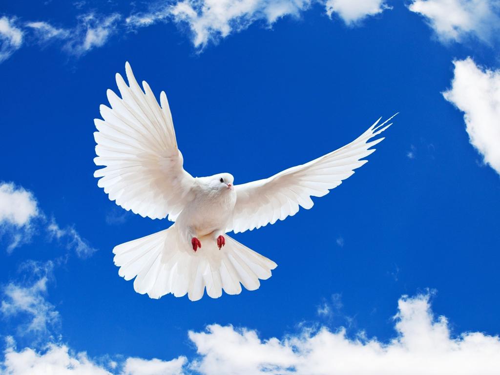 в небе белоснежный голубь