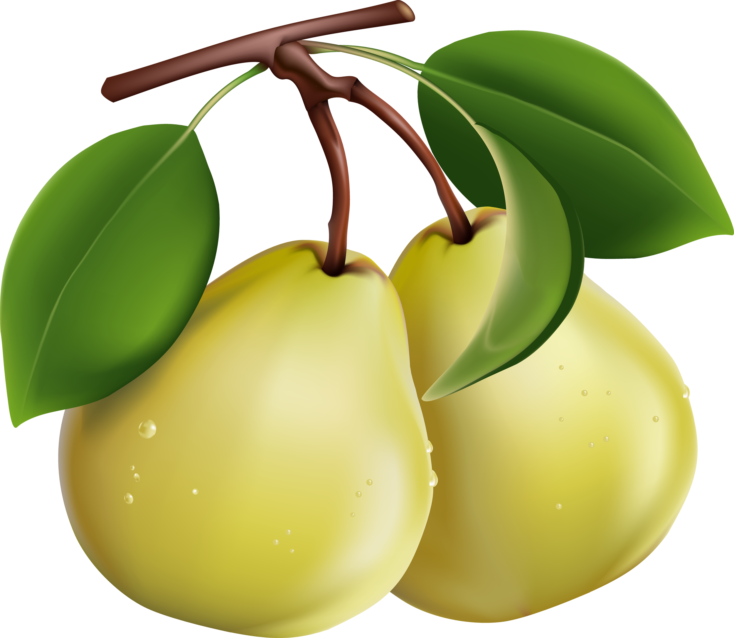 фрукты груши
