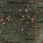 деревья кора