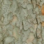 текстура кора дерево