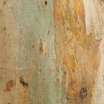 текстура дерева коры