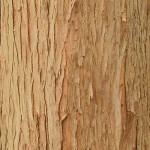 дерево кора
