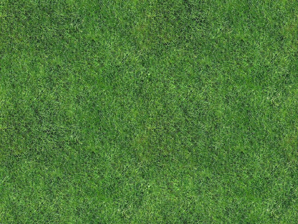текстура фото газона