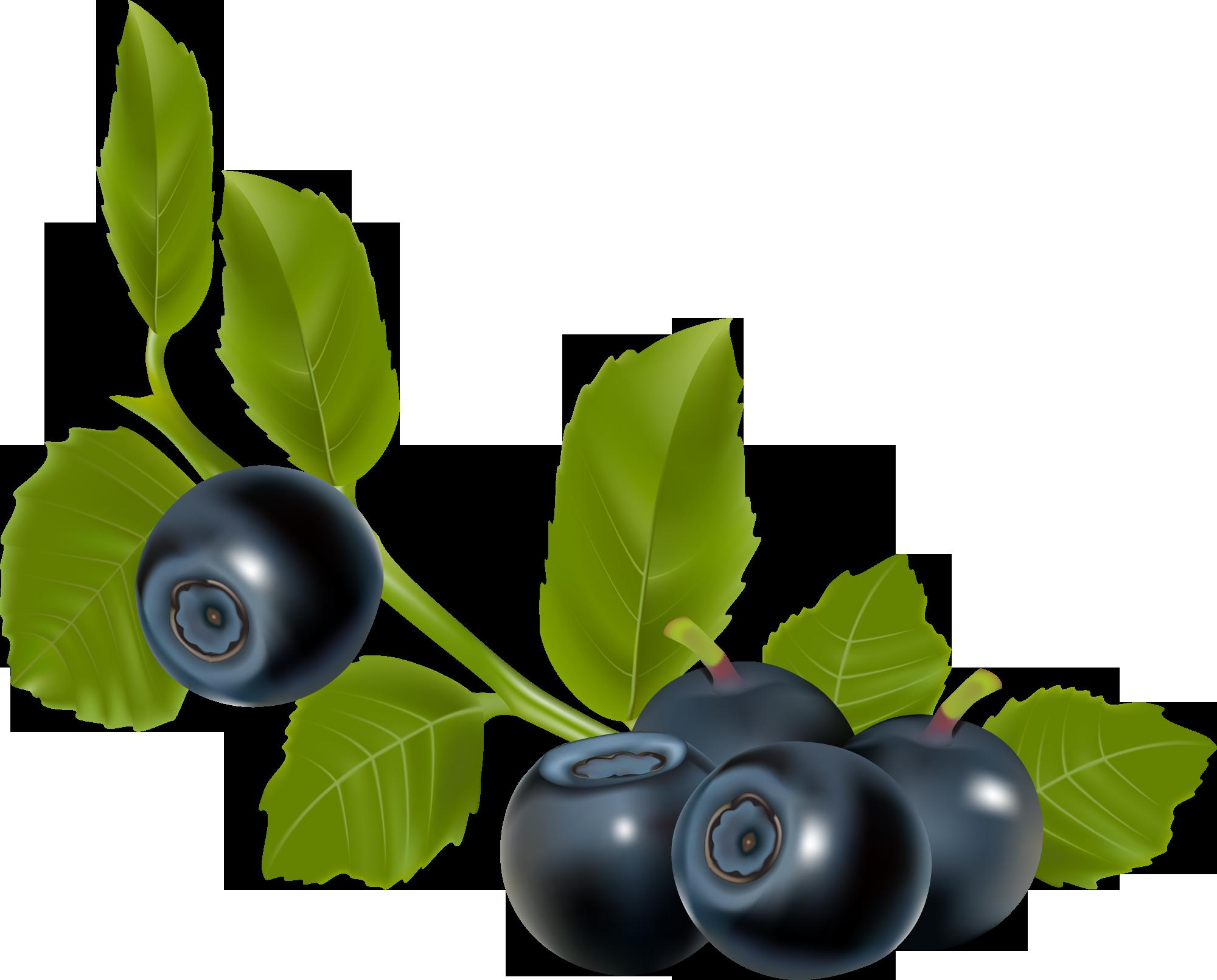 Ягода черника