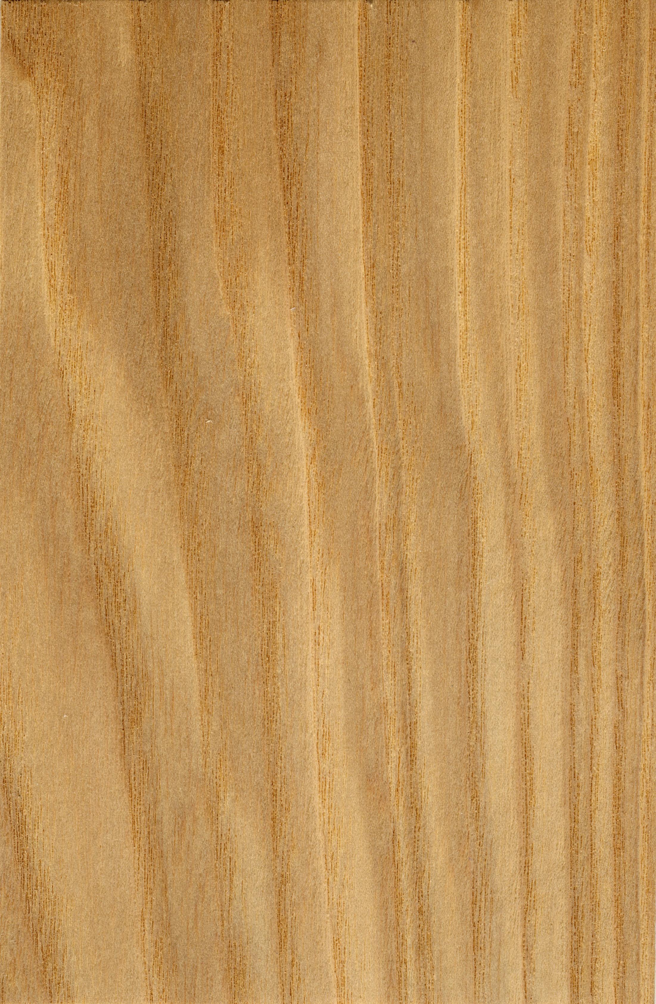 ясень фактура дерева