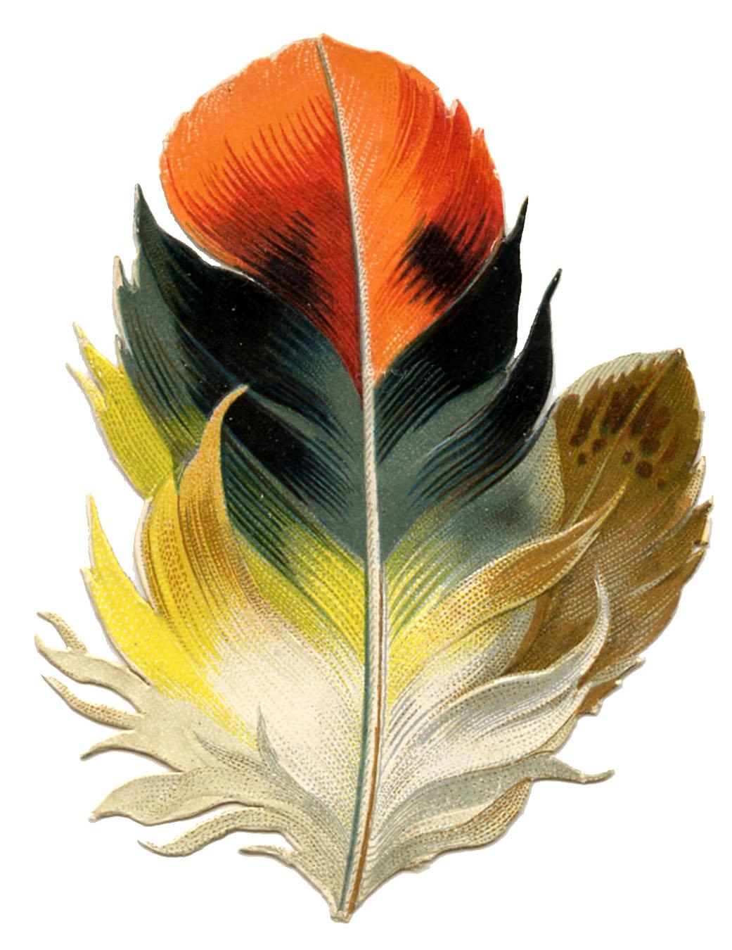цветное перышко
