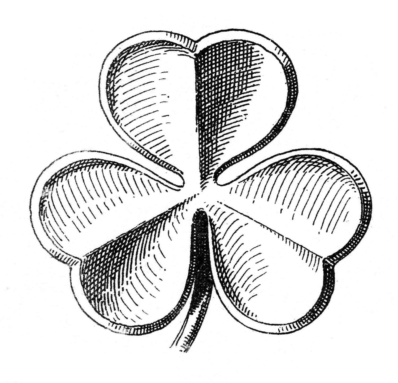 Trevo De Tres Folhas Desenho Gravura Abali Ru