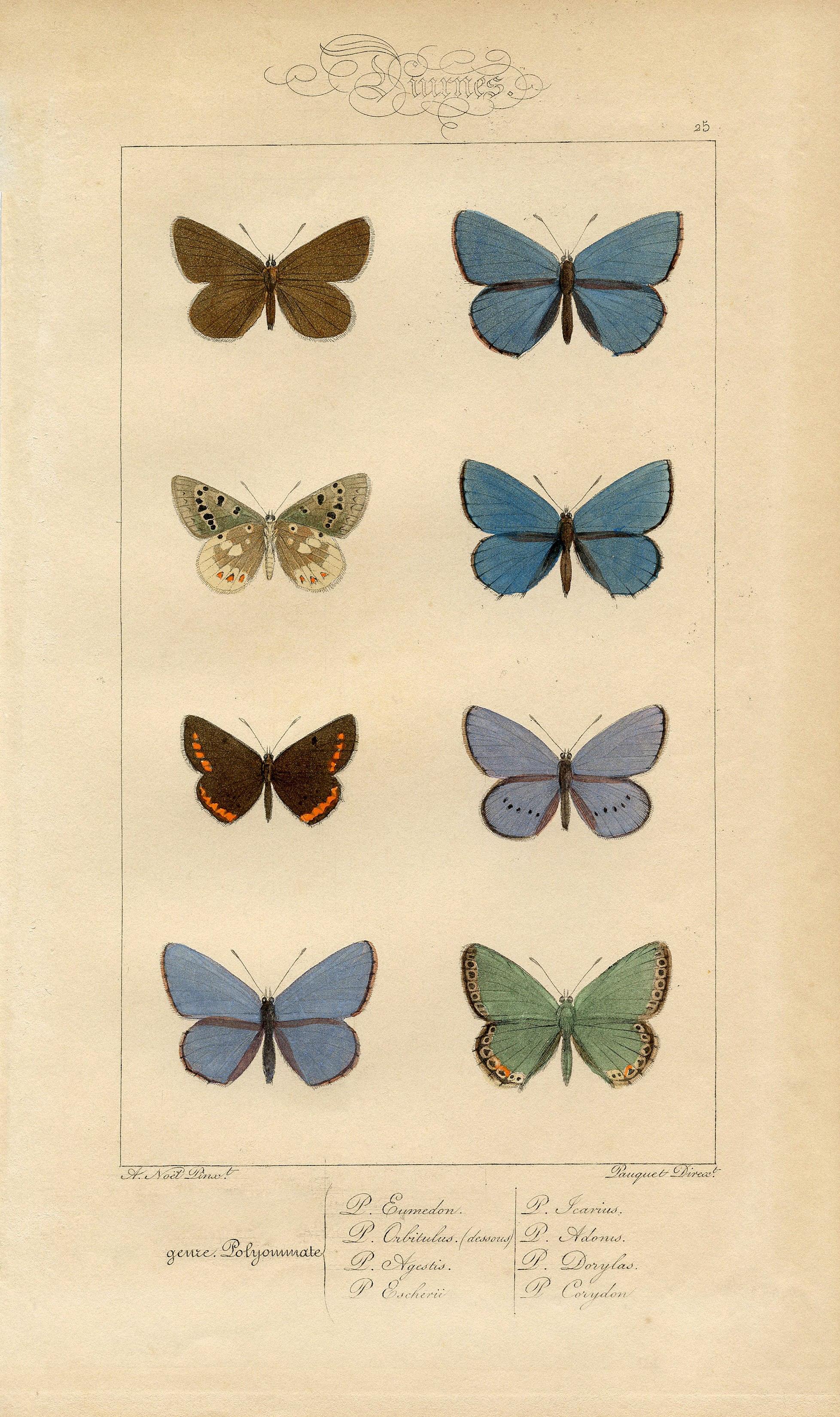 Бабочки - винтажный рисунок