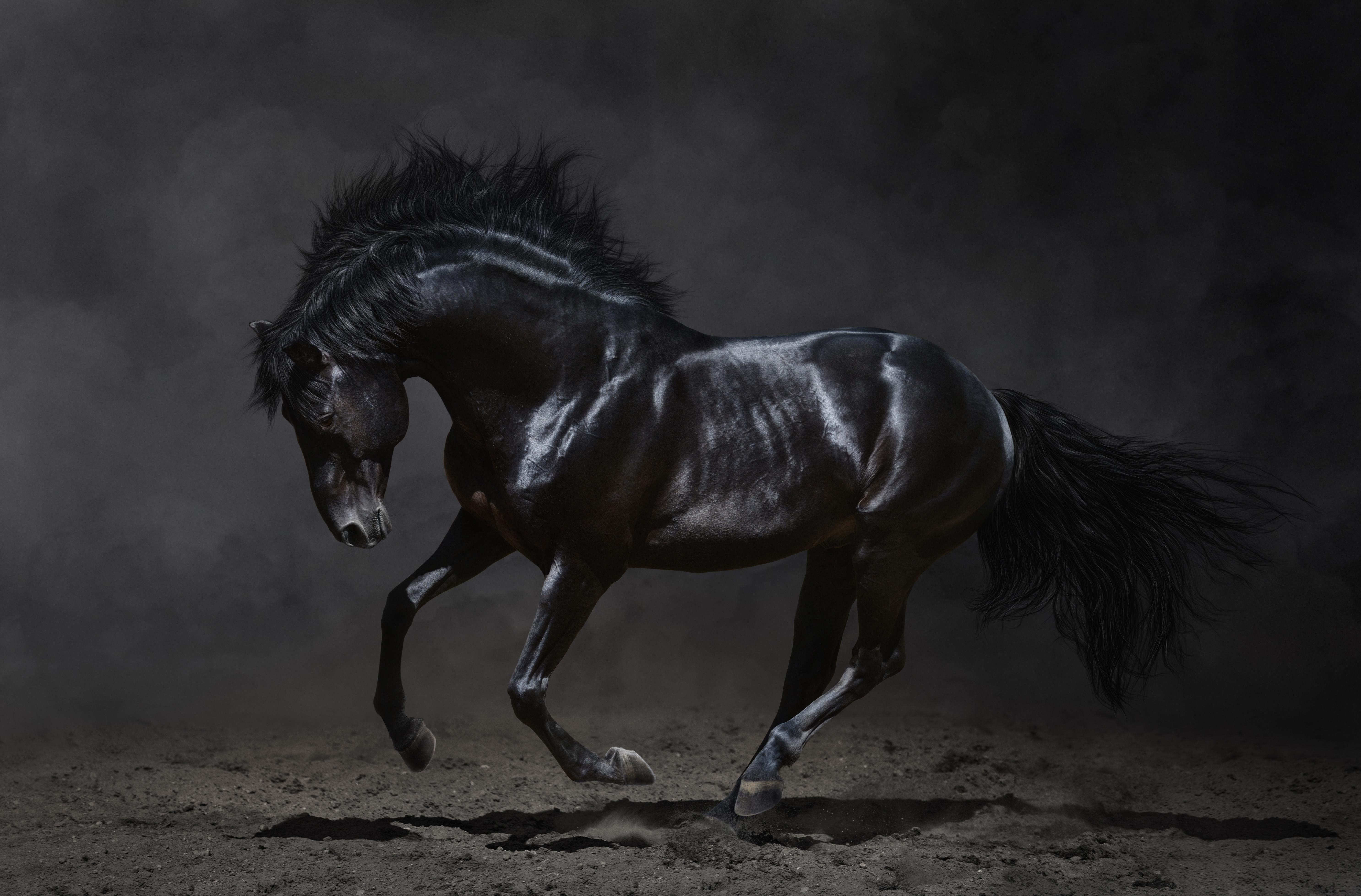 Черный конь на темном фоне