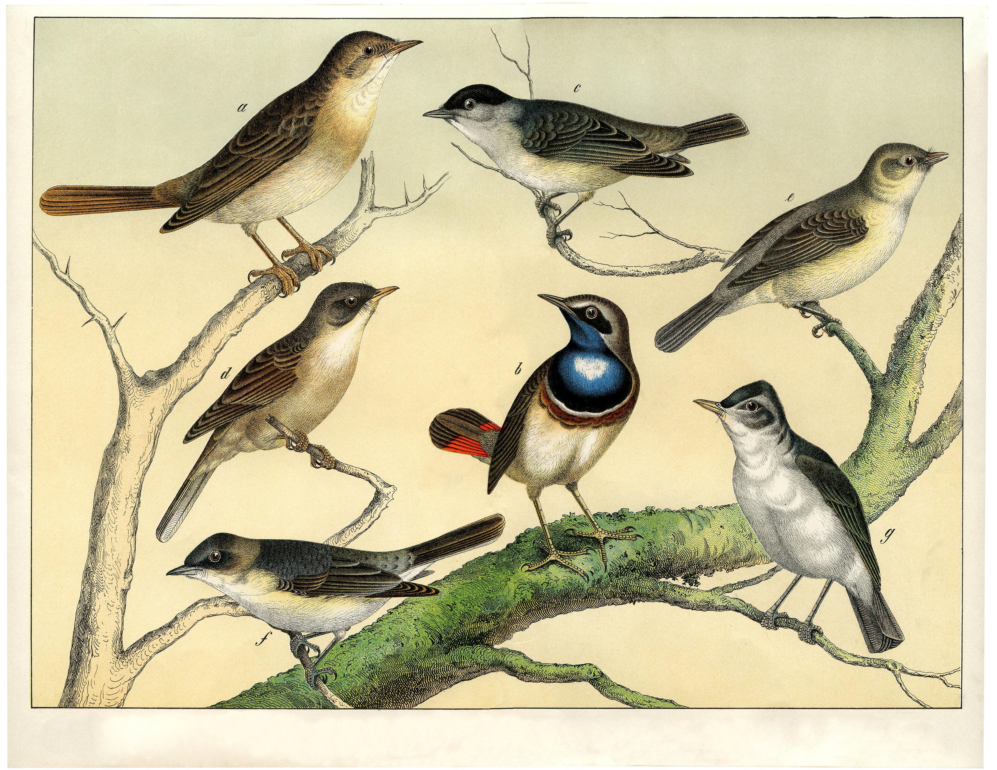 Винтажный рисунок с изображением семи красивых ярких птиц