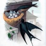 Ласточки в гнезде - винтажный рисунок