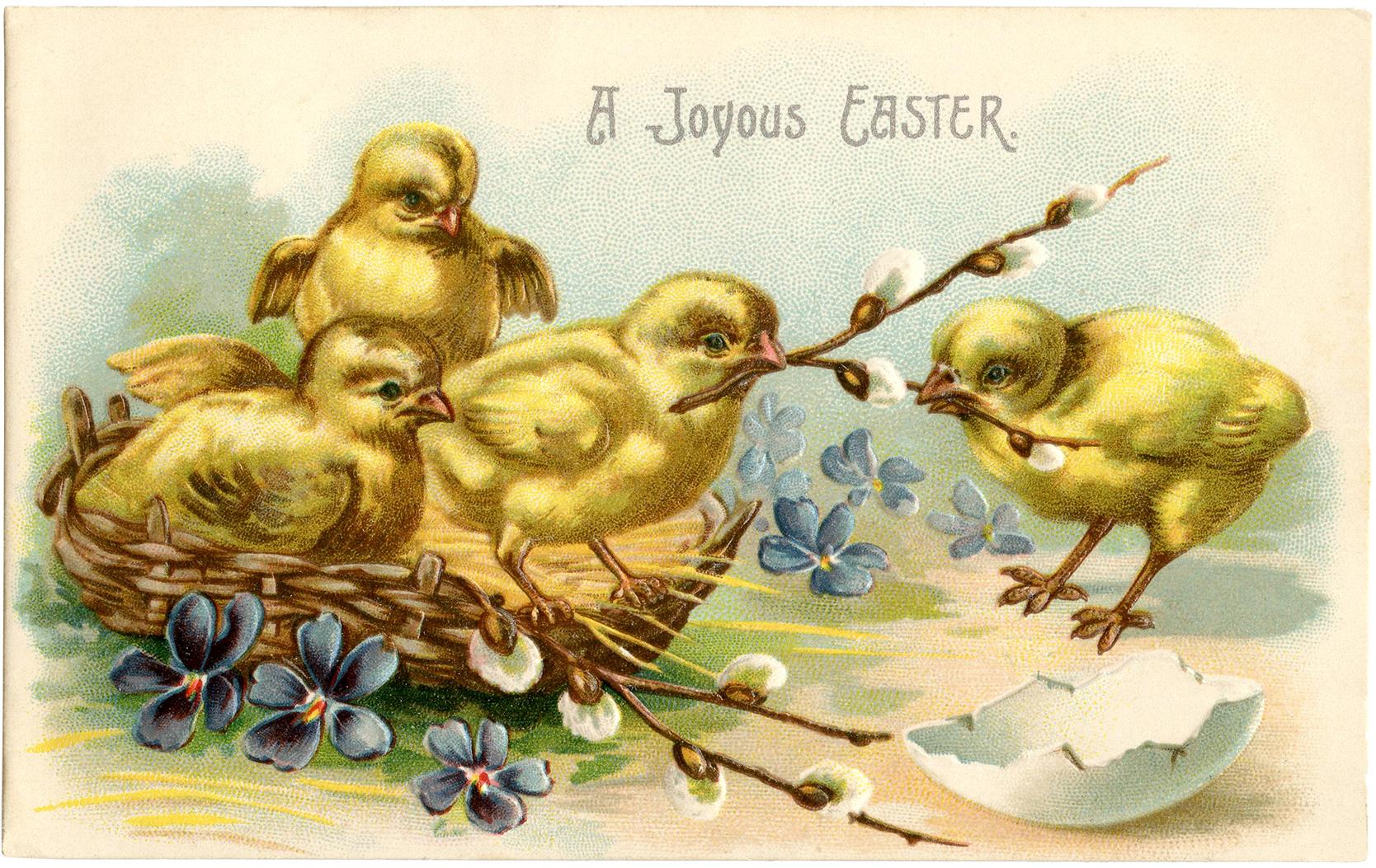 Пасхальная открытка с изображением вылупившихся цыплят