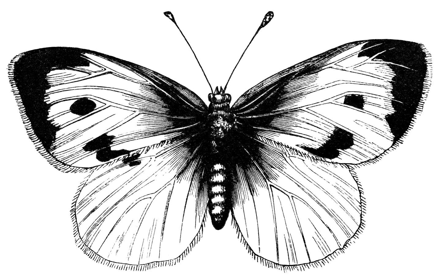 Черно-белый рисунок с изображением бабочки