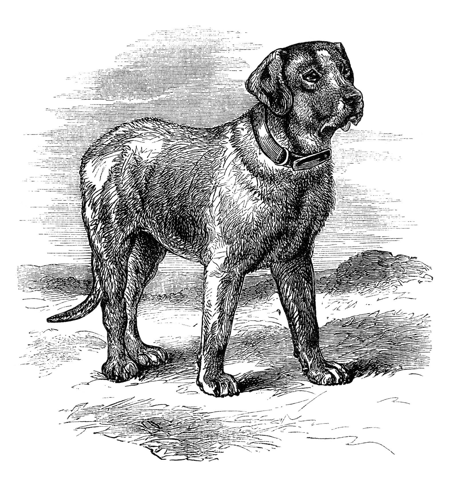Винтажный черно-белый рисунок с изображением собаки