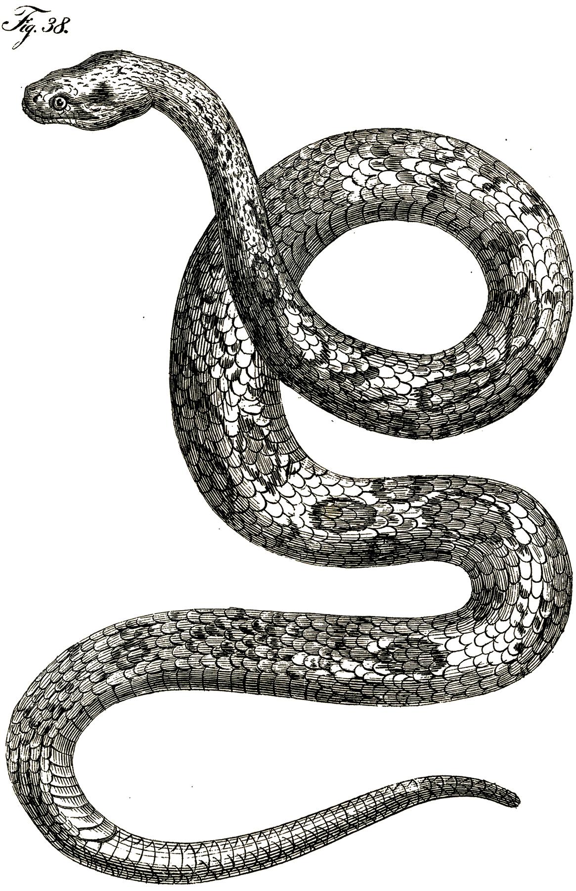 Рисунок с изображением змеи