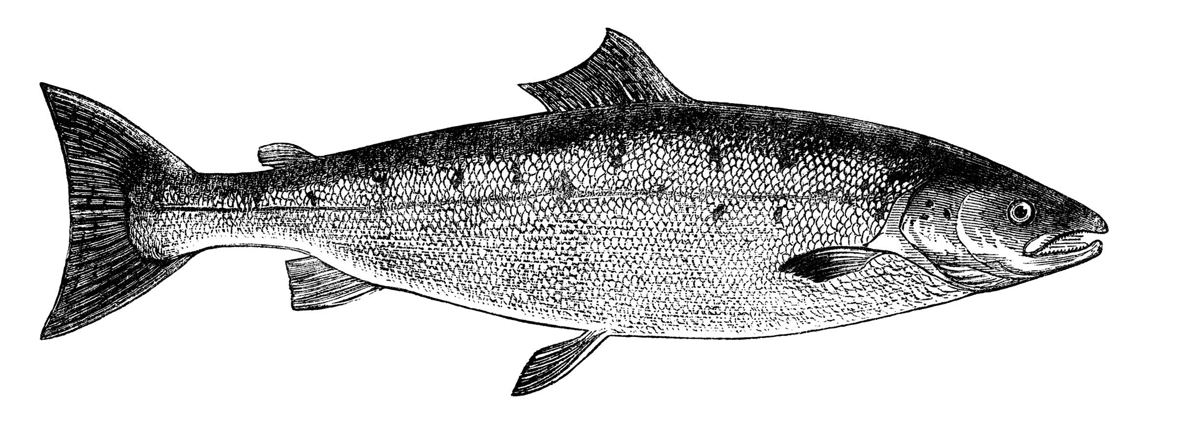 черно-белый рисунок с изображением рыбы